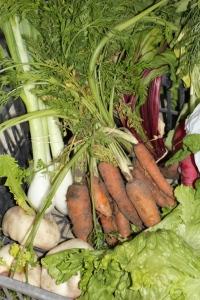 Le panier légumes de la semaine